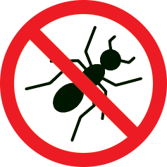 Insectes xylophages